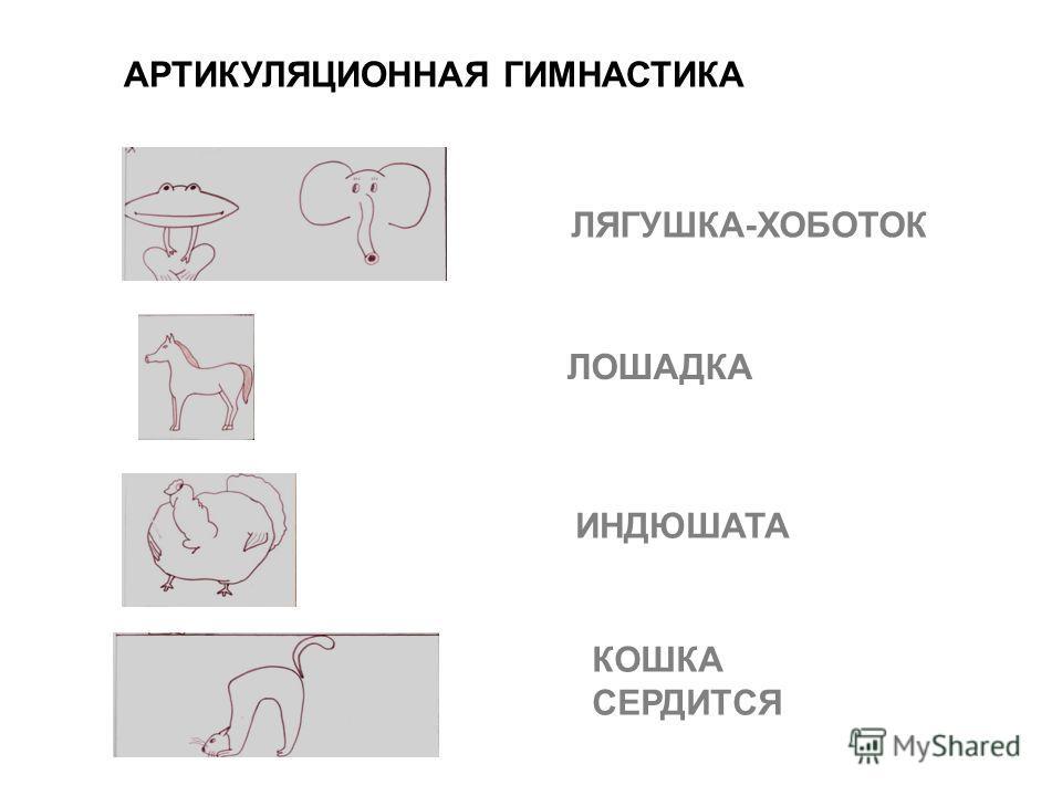 ЛЯГУШКА-ХОБОТОК ЛОШАДКА ИНДЮШАТА КОШКА СЕРДИТСЯ АРТИКУЛЯЦИОННАЯ ГИМНАСТИКА