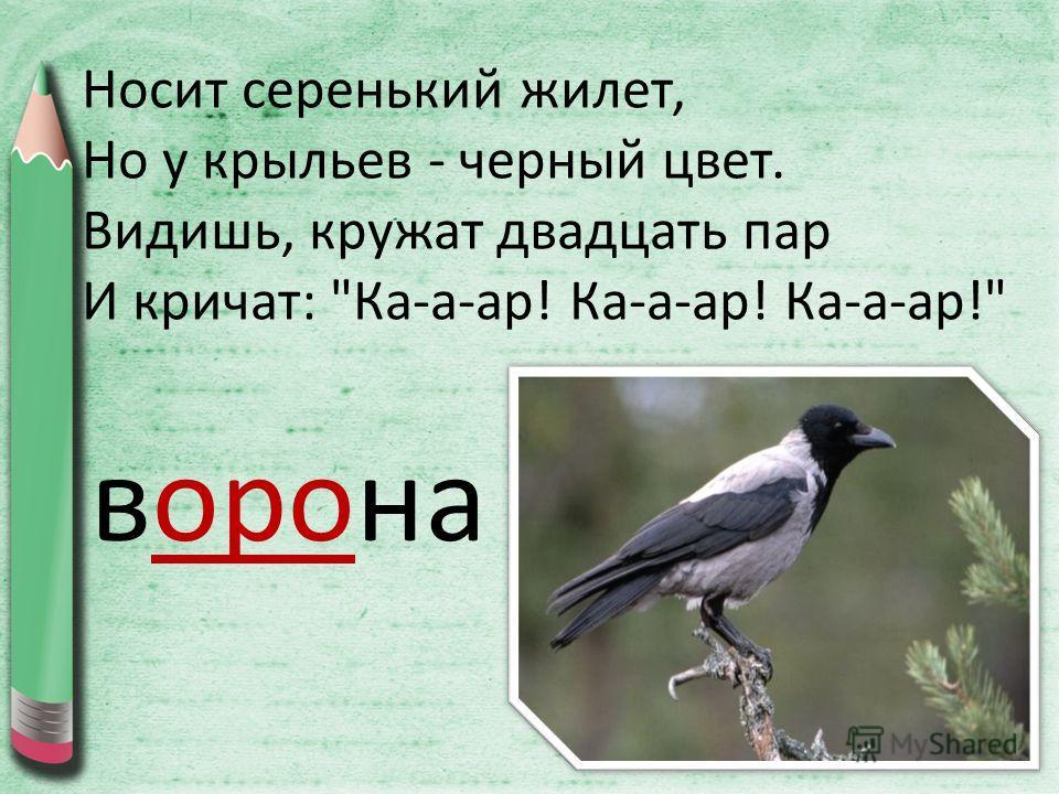 Носит серенький жилет, Но у крыльев - черный цвет. Видишь, кружат двадцать пар И кричат: Ка-а-ар! Ка-а-ар! Ка-а-ар! ворона