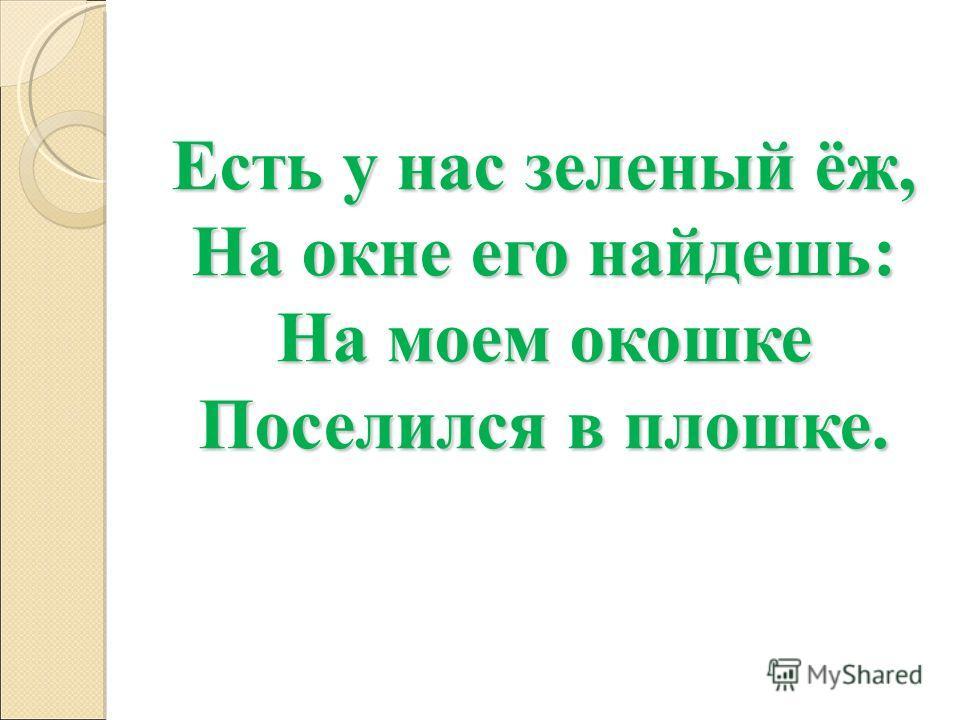 Есть у нас зеленый ёж, На окне его найдешь: На моем окошке Поселился в плошке.
