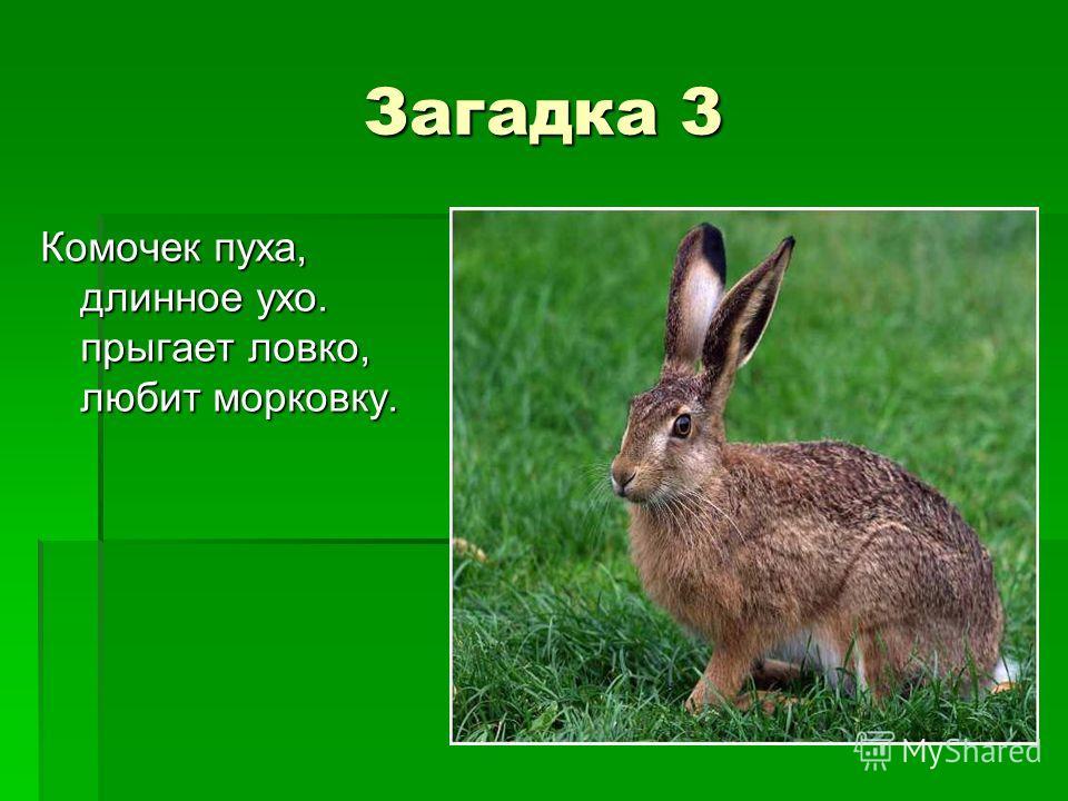 Загадка 3 Комочек пуха, длинное ухо. прыгает ловко, любит морковку.