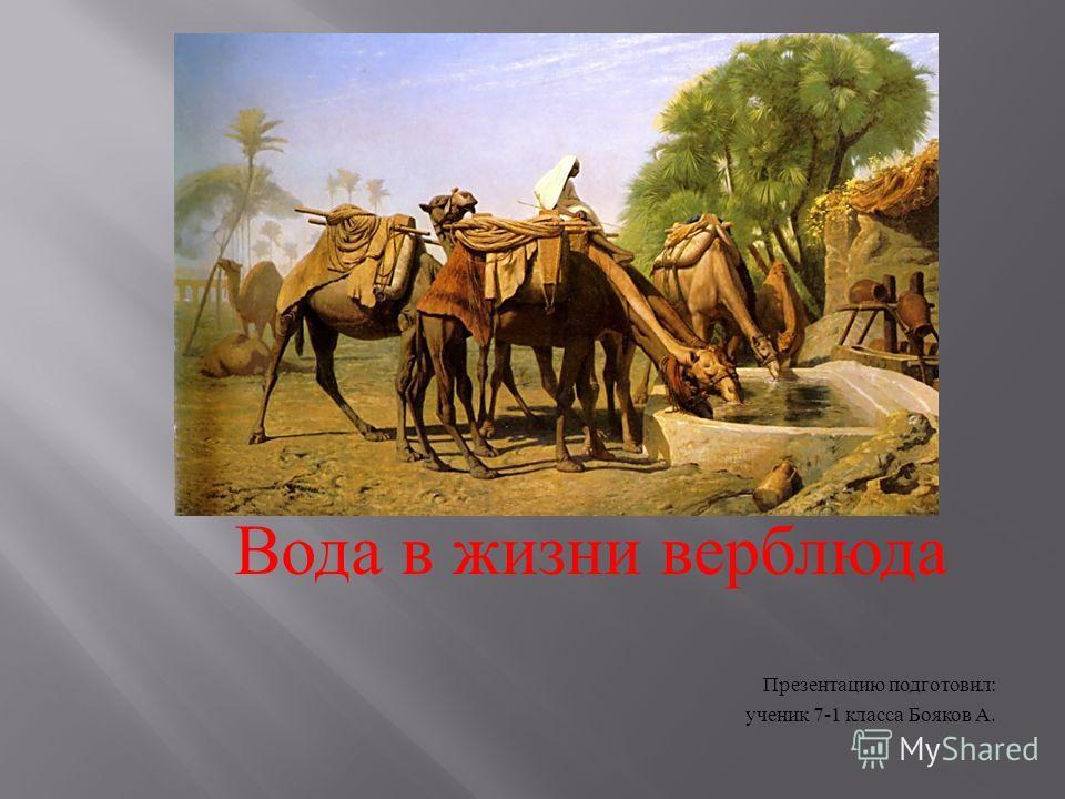 Вода в жизни верблюда Презентацию подготовил : ученик 7-1 класса Бояков А.