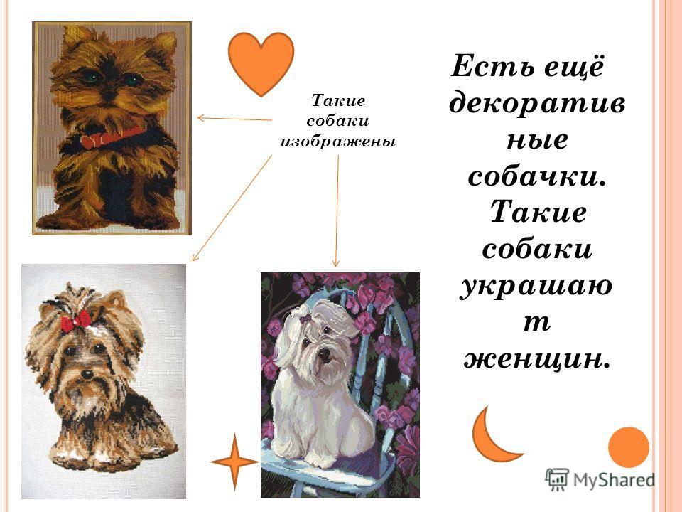 Есть ещё декоратив ные собачки. Такие собаки украшаю т женщин. Такие собаки изображены