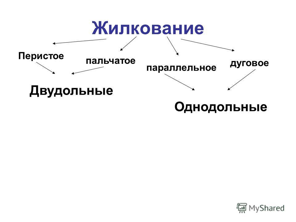 Жилкование Перистое пальчатое дуговое параллельное Двудольные Однодольные