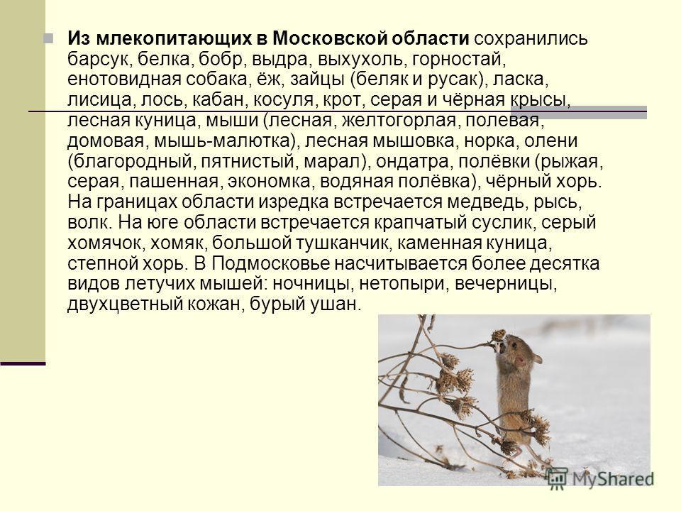 Из млекопитающих в Московской области сохранились барсук, белка, бобр, выдра, выхухоль, горностай, енотовидная собака, ёж, зайцы (беляк и русак), ласка, лисица, лось, кабан, косуля, крот, серая и чёрная крысы, лесная куница, мыши (лесная, желтогорлая