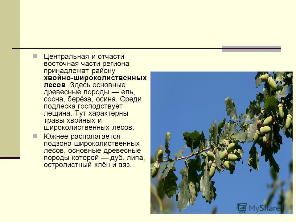 Центральная и отчасти восточная части региона принадлежат району хвойно-широколиственных лесов. Здесь основные древесные породы ель, сосна, берёза, осина. Среди подлеска господствует лещина. Тут характерны травы хвойных и широколиственных лесов. Южне