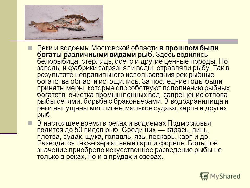 Реки и водоемы Московской области в прошлом были богаты различными видами рыб. Здесь водились белорыбица, стерлядь, осетр и другие ценные породы. Но заводы и фабрики загрязняли воды, отравляли рыбу. Так в результате неправильного использования рек ры