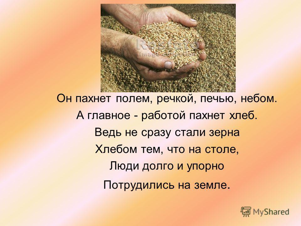 Он пахнет полем, речкой, печью, небом. А главное - работой пахнет хлеб. Ведь не сразу стали зерна Хлебом тем, что на столе, Люди долго и упорно Потрудились на земле.