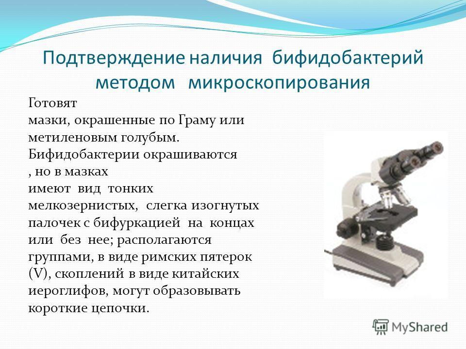 Подтверждение наличия бифидобактерий методом микроскопирования Готовят мазки, окрашенные по Граму или метиленовым голубым. Бифидобактерии окрашиваются, но в мазках имеют вид тонких мелкозернистых, слегка изогнутых палочек с бифуркацией на концах или