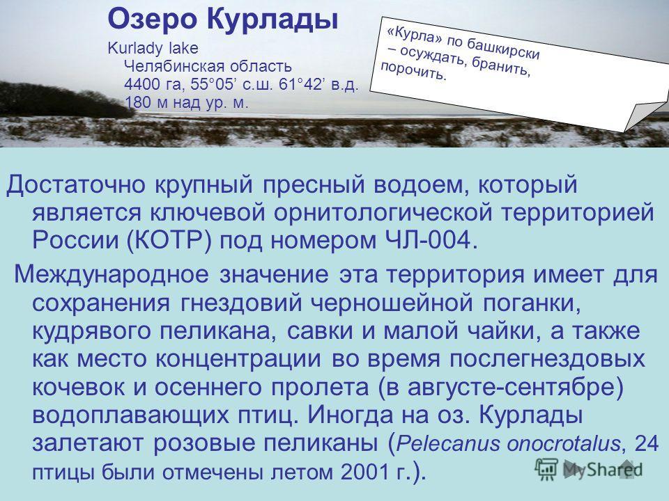 Озеро Курлады Kurlady lake Челябинская область 4400 га, 55°05 с.ш. 61°42 в.д. 180 м над ур. м. Достаточно крупный пресный водоем, который является ключевой орнитологической территорией России (КОТР) под номером ЧЛ-004. Международное значение эта терр