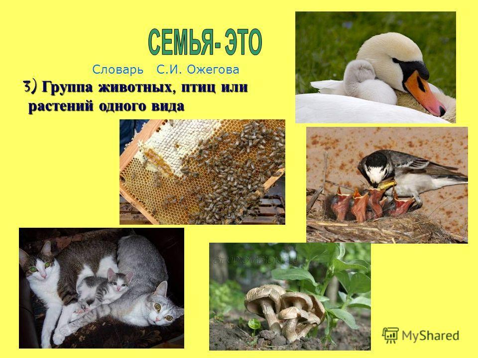 Словарь С.И. Ожегова 3) Группа животных, птиц или растений одного вида растений одного вида