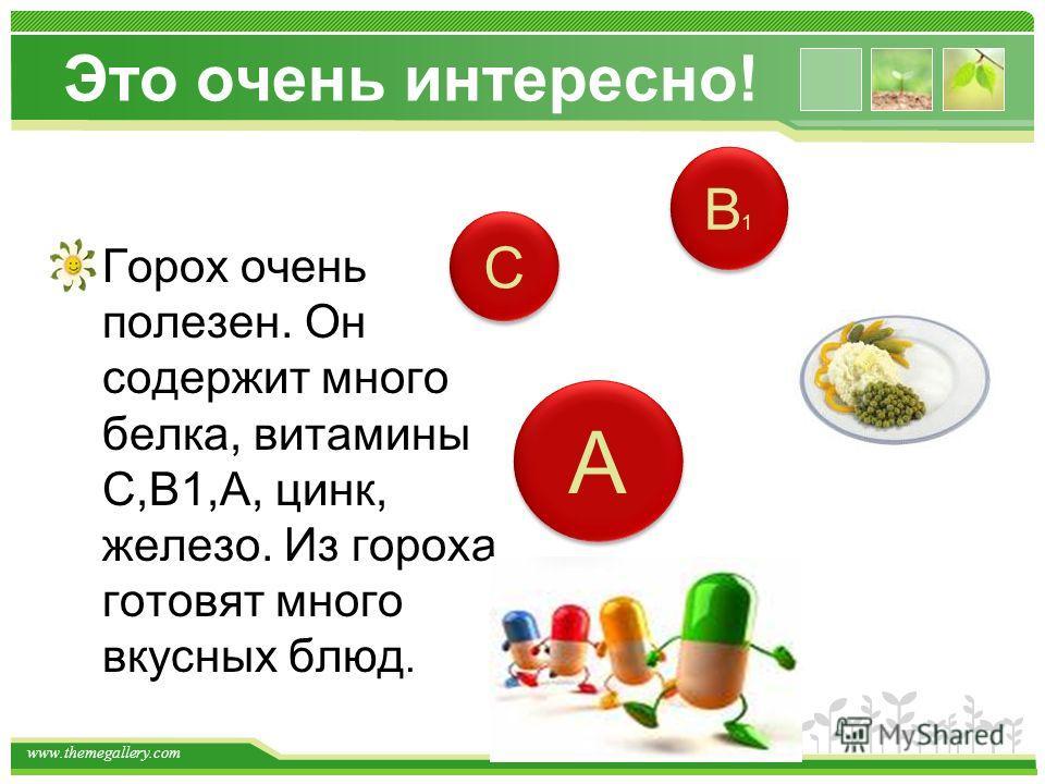 www.themegallery.com Это очень интересно! Горох очень полезен. Он содержит много белка, витамины С,В1,А, цинк, железо. Из гороха готовят много вкусных блюд. С С В1В1 В1В1 А А