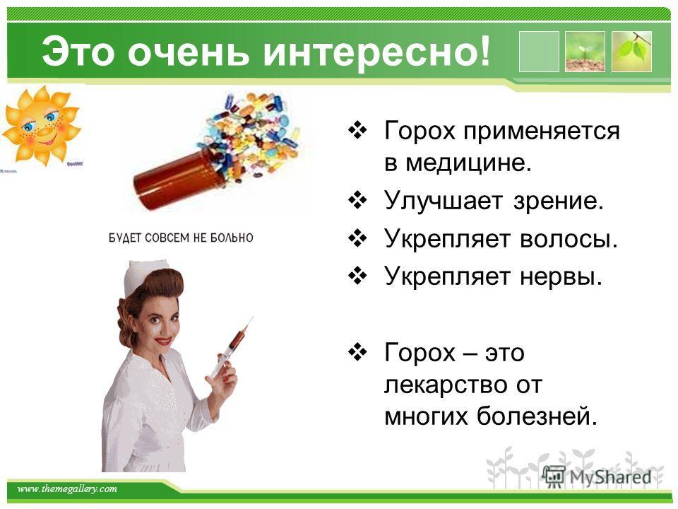 www.themegallery.com Это очень интересно! Горох применяется в медицине. Улучшает зрение. Укрепляет волосы. Укрепляет нервы. Горох – это лекарство от многих болезней.
