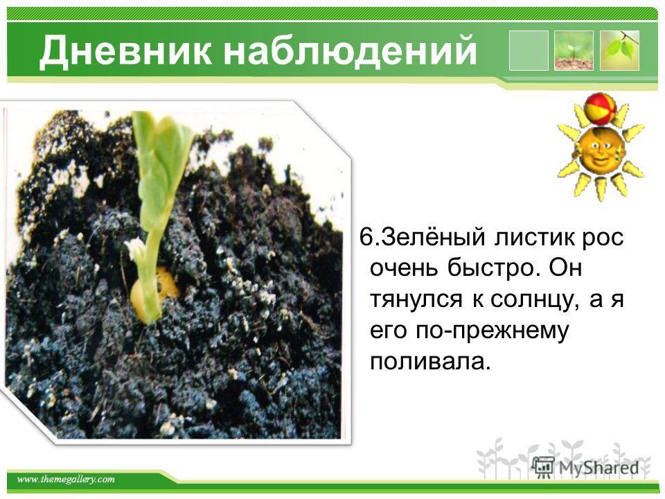 www.themegallery.com Дневник наблюдений 6.Зелёный листик рос очень быстро. Он тянулся к солнцу, а я его по-прежнему поливала.