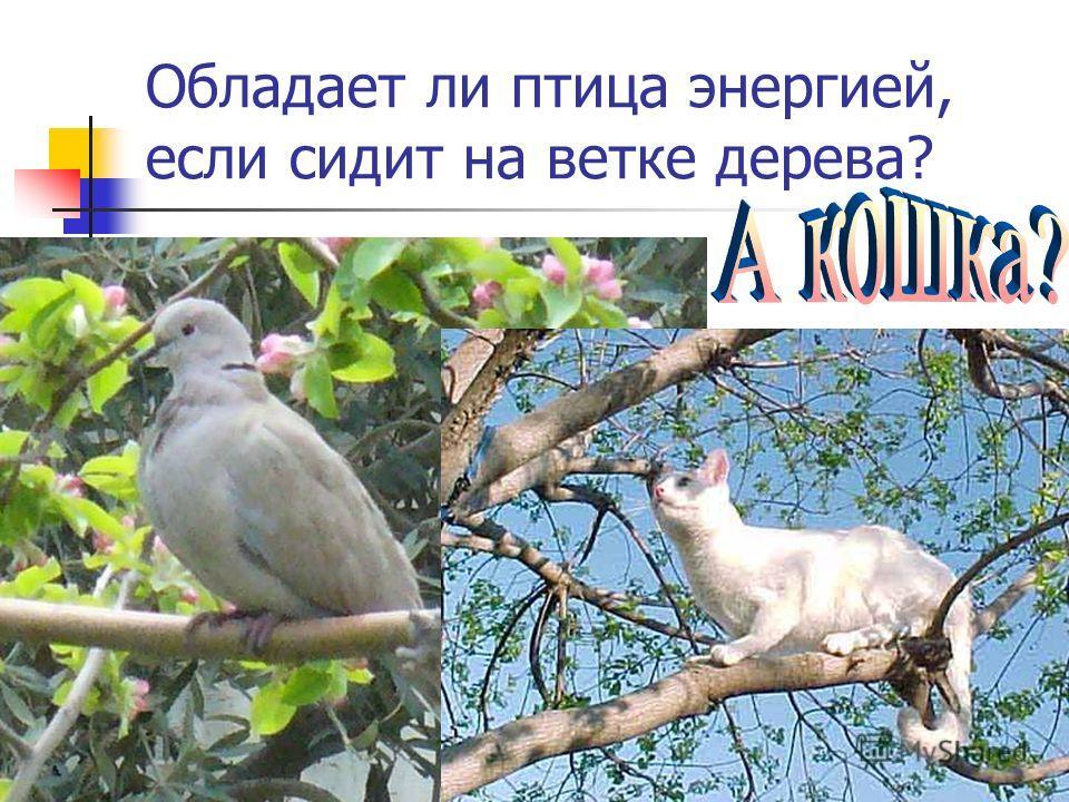 Обладает ли птица энергией, если сидит на ветке дерева?