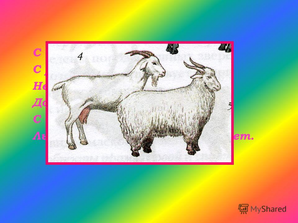 С бородою, а не старик, С рогами, а не бык, Не конь, а брыкается, Доят, а не корова, С пухом, а не птица, Лыко дерет, а лаптей не плетет.