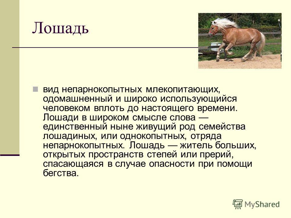 Лошадь вид непарнокопытных млекопитающих, одомашненный и широко использующийся человеком вплоть до настоящего времени. Лошади в широком смысле слова единственный ныне живущий род семейства лошадиных, или однокопытных, отряда непарнокопытных. Лошадь ж