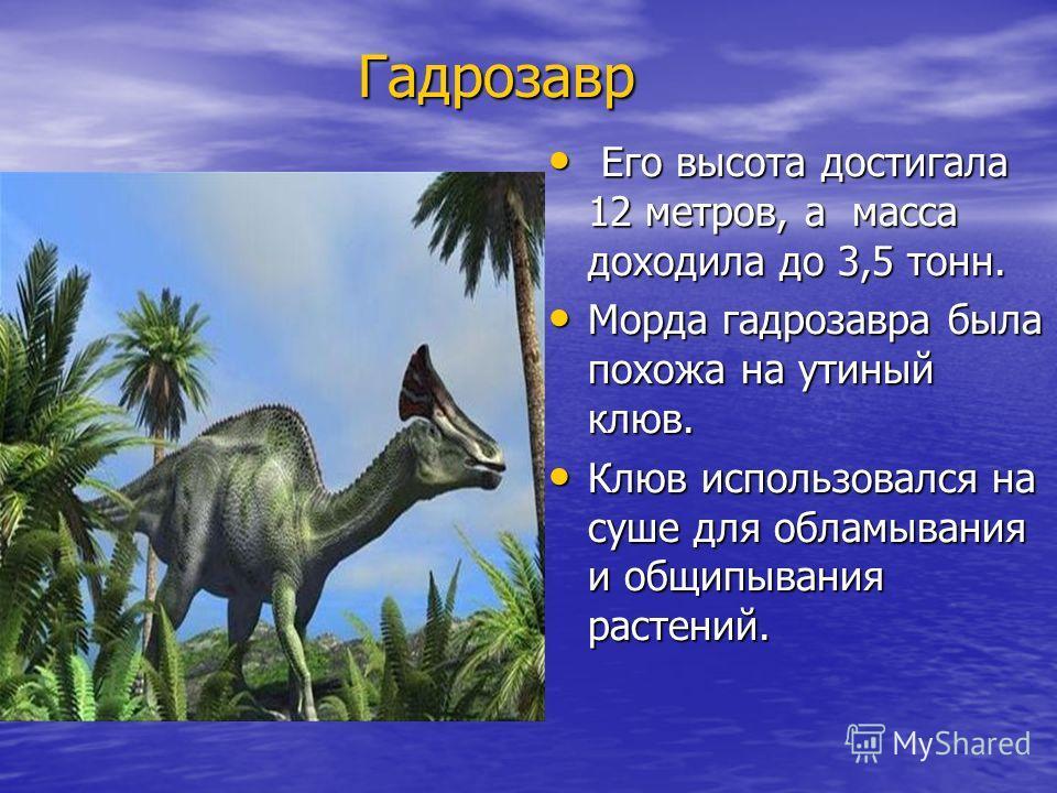 Гадрозавр Гадрозавр Его высота достигала 12 метров, а масса доходила до 3,5 тонн. Его высота достигала 12 метров, а масса доходила до 3,5 тонн. Морда гадрозавра была похожа на утиный клюв. Морда гадрозавра была похожа на утиный клюв. Клюв использовал