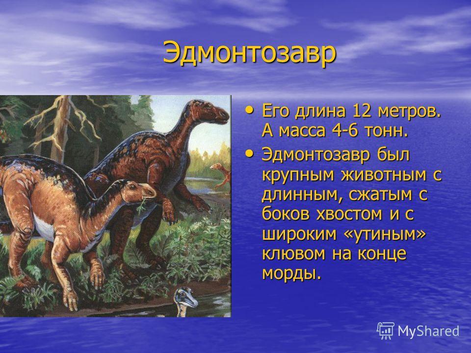 Эдмонтозавр Эдмонтозавр Его длина 12 метров. А масса 4-6 тонн. Его длина 12 метров. А масса 4-6 тонн. Эдмонтозавр был крупным животным с длинным, сжатым с боков хвостом и с широким «утиным» клювом на конце морды. Эдмонтозавр был крупным животным с дл