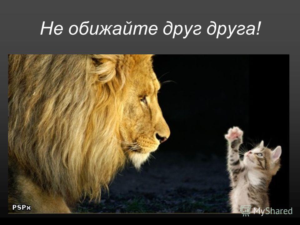 Не обижайте друг друга!
