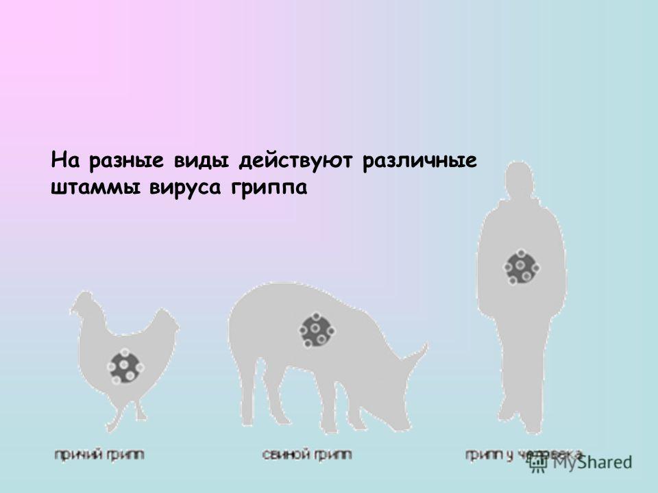 На разные виды действуют различные штаммы вируса гриппа