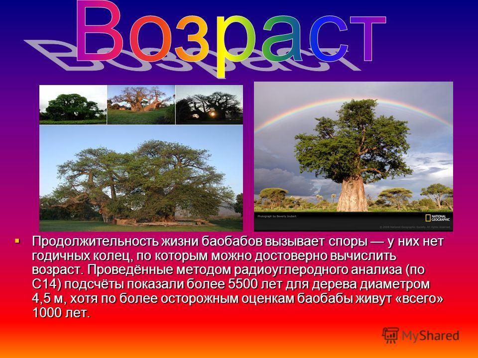 Продолжительность жизни баобабов вызывает споры у них нет годичных колец, по которым можно достоверно вычислить возраст. Проведённые методом радиоуглеродного анализа (по С14) подсчёты показали более 5500 лет для дерева диаметром 4,5 м, хотя по более