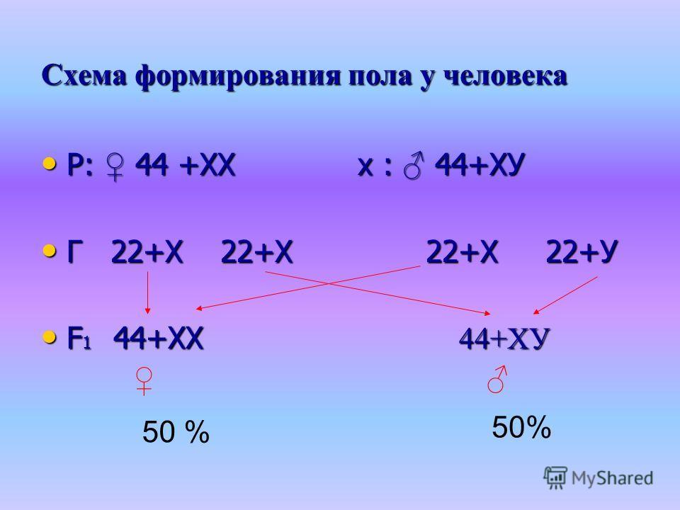 Схема формирования пола у человека Р: 44 +ХХ х : 44+ХУ Р: 44 +ХХ х : 44+ХУ Г 22+Х 22+Х 22+Х 22+У Г 22+Х 22+Х 22+Х 22+У F 1 44+ХХ 44+ХУ F 1 44+ХХ 44+ХУ 50 %