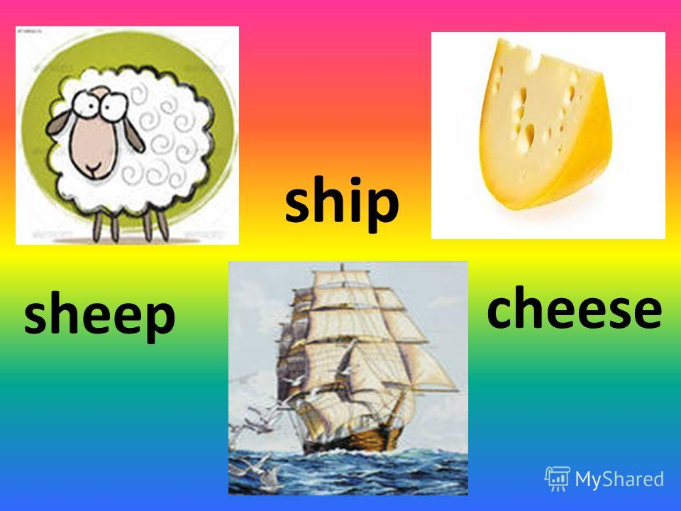 sheep ship cheese