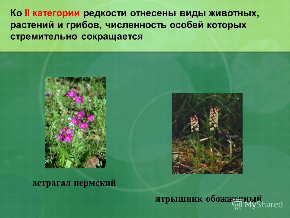 Ко II категории редкости отнесены виды животных, растений и грибов, численность особей которых стремительно сокращается астрагал пермский ятрышник обожженный