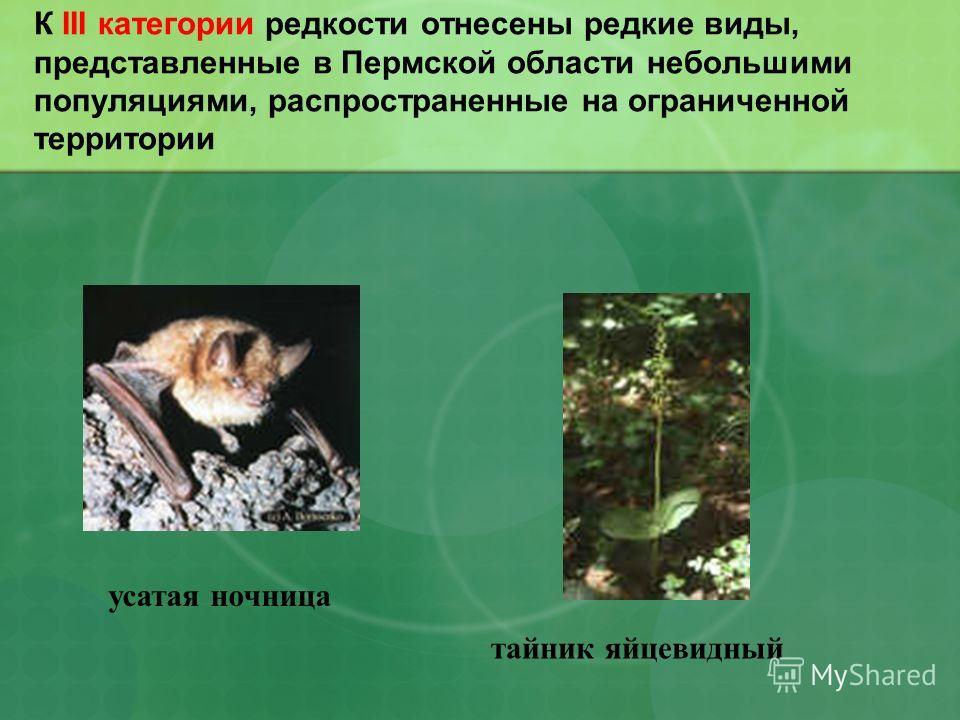К III категории редкости отнесены редкие виды, представленные в Пермской области небольшими популяциями, распространенные на ограниченной территории усатая ночница тайник яйцевидный