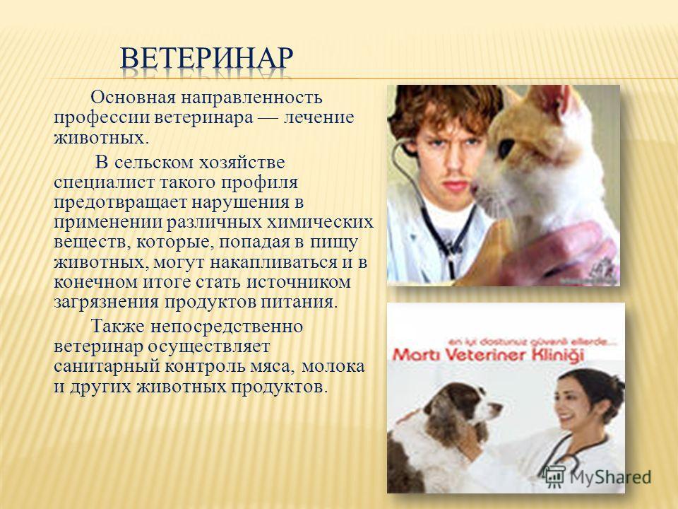 Основная направленность профессии ветеринара лечение животных. В сельском хозяйстве специалист такого профиля предотвращает нарушения в применении различных химических веществ, которые, попадая в пищу животных, могут накапливаться и в конечном итоге