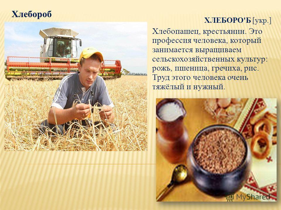 ХЛЕБОРО'Б [укр.] Хлебопашец, крестьянин. Это профессия человека, который занимается выращиваем сельскохозяйственных культур: рожь, пшеница, гречиха, рис. Труд этого человека очень тяжёлый и нужный.
