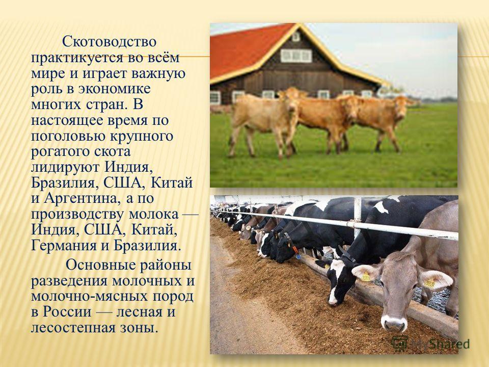 Скотоводство практикуется во всём мире и играет важную роль в экономике многих стран. В настоящее время по поголовью крупного рогатого скота лидируют Индия, Бразилия, США, Китай и Аргентина, а по производству молока Индия, США, Китай, Германия и Браз