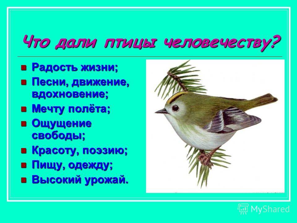 Что дали птицы человечеству? Радость жизни; Радость жизни; Песни, движение, вдохновение; Песни, движение, вдохновение; Мечту полёта; Мечту полёта; Ощущение свободы; Ощущение свободы; Красоту, поэзию; Красоту, поэзию; Пищу, одежду; Пищу, одежду; Высок