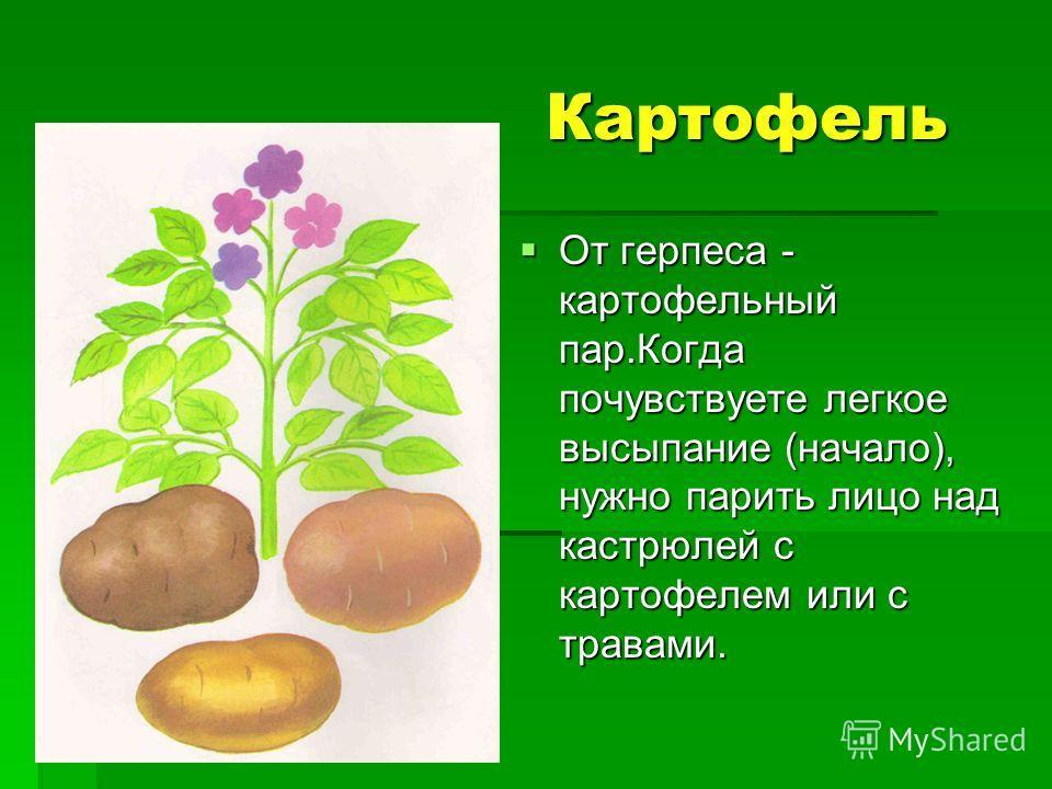 Картофель От герпеса - картофельный пар.Когда почувствуете легкое высыпание (начало), нужно парить лицо над кастрюлей с картофелем или с травами.