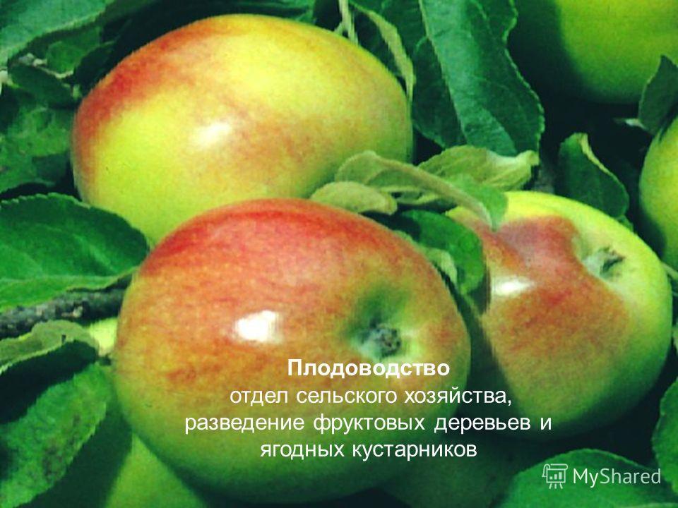 Плодоводство отдел сельского хозяйства, разведение фруктовых деревьев и ягодных кустарников