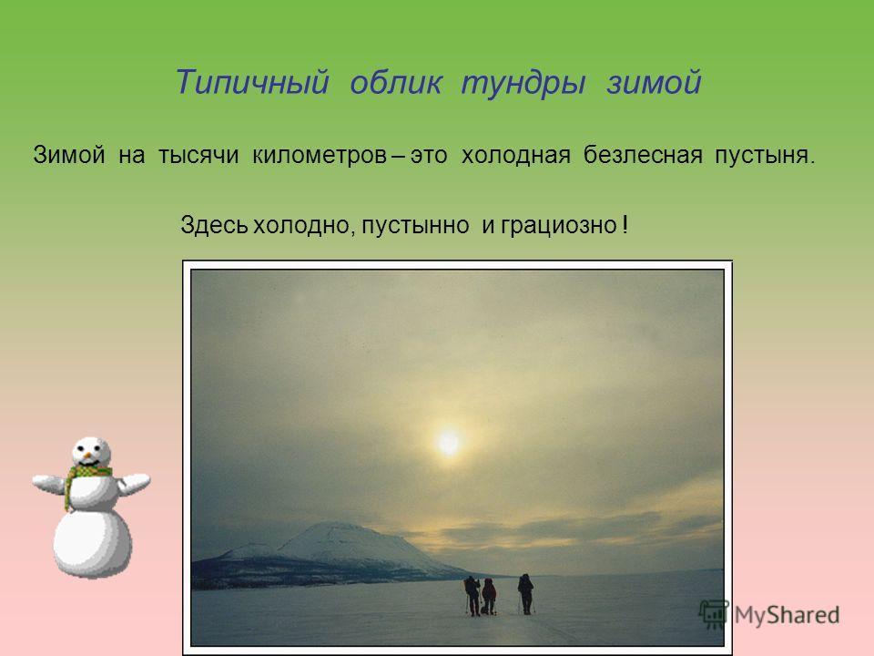 Типичный облик тундры зимой Зимой на тысячи километров – это холодная безлесная пустыня. Здесь холодно, пустынно и грациозно !