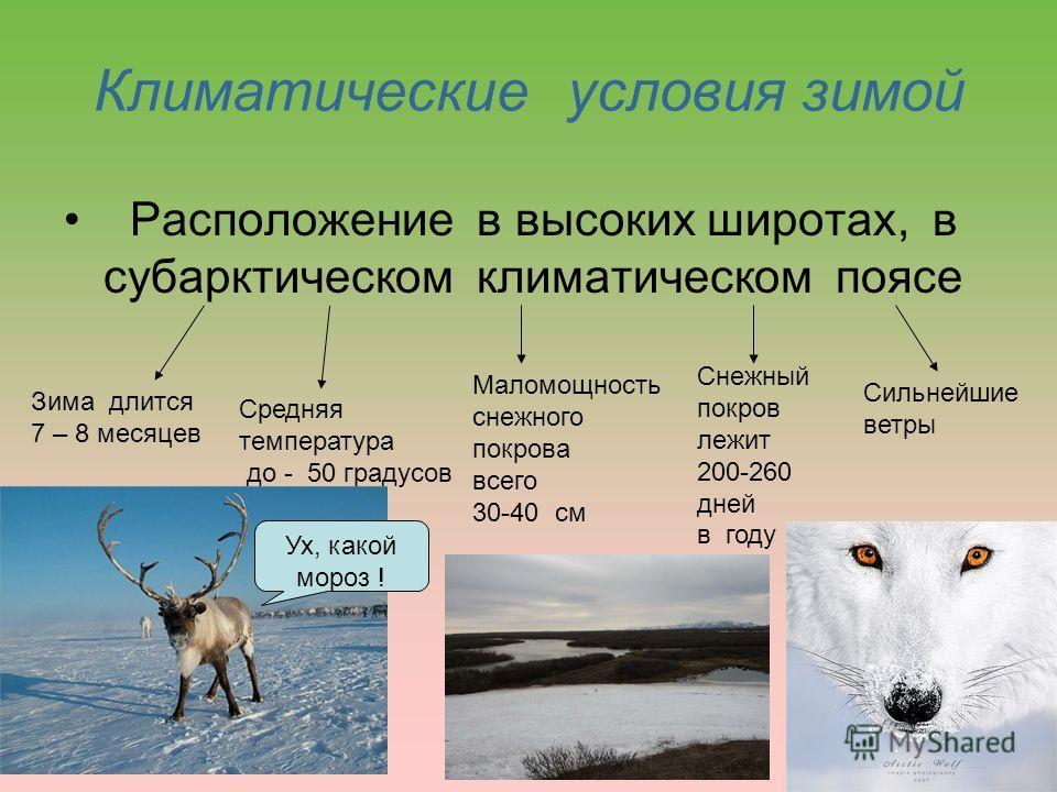 Климатические условия зимой Расположение в высоких широтах, в субарктическом климатическом поясе Зима длится 7 – 8 месяцев Средняя температура до - 50 градусов Маломощность снежного покрова всего 30-40 см Снежный покров лежит 200-260 дней в году Силь