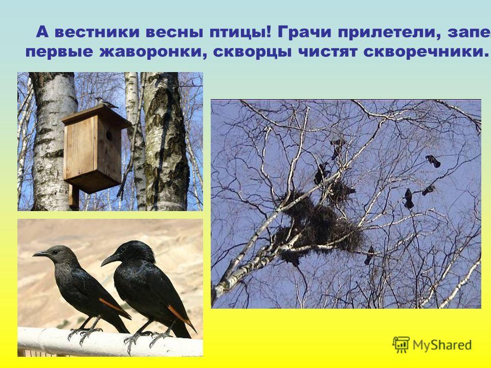 А вестники весны птицы! Грачи прилетели, запели первые жаворонки, скворцы чистят скворечники.
