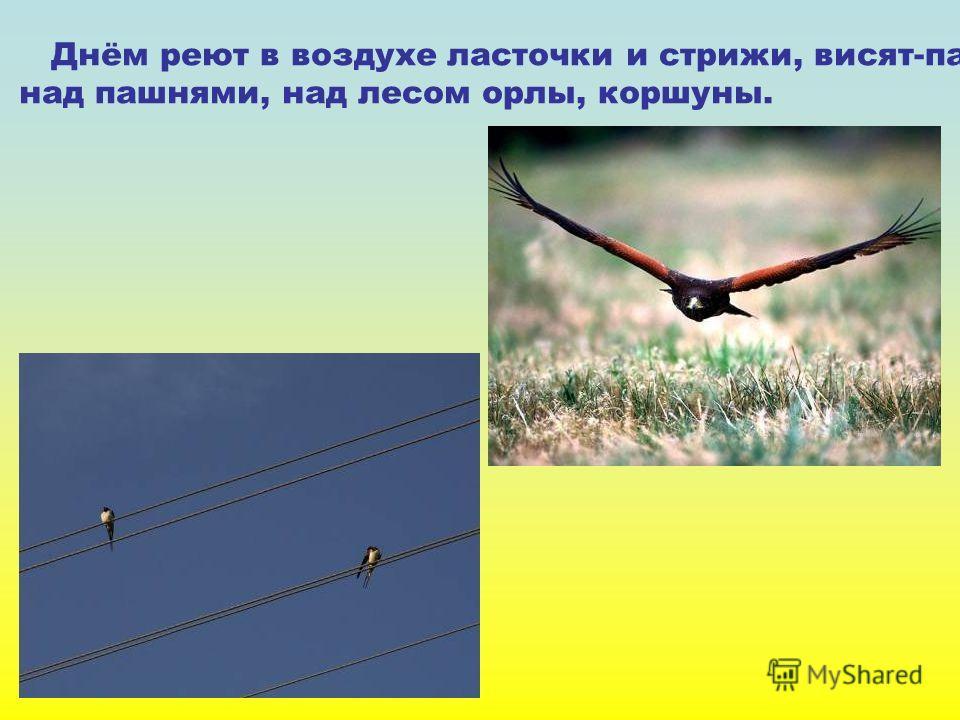 Днём реют в воздухе ласточки и стрижи, висят-парят над пашнями, над лесом орлы, коршуны.
