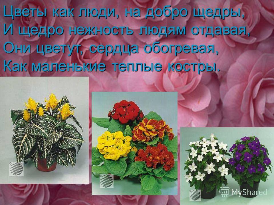 Цветы как люди, на добро щедры, И щедро нежность людям отдавая, Они цветут, сердца обогревая, Как маленькие теплые костры.