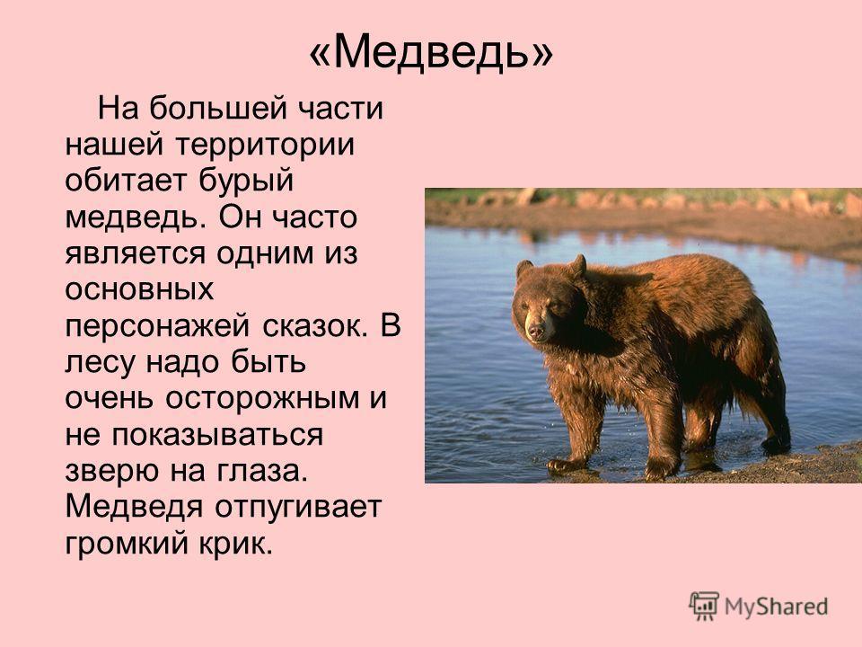 «Медведь» На большей части нашей территории обитает бурый медведь. Он часто является одним из основных персонажей сказок. В лесу надо быть очень осторожным и не показываться зверю на глаза. Медведя отпугивает громкий крик.