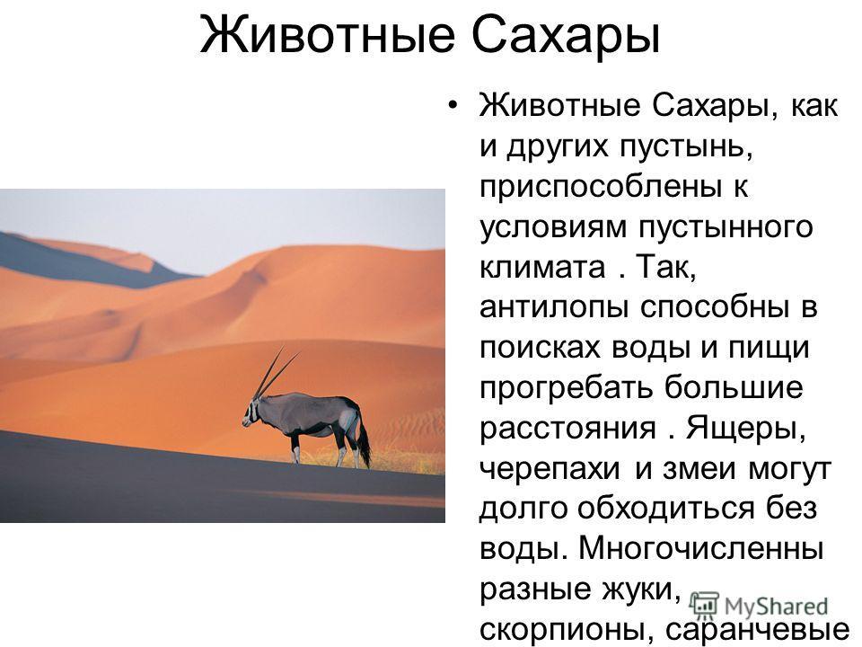 Животные Сахары Животные Сахары, как и других пустынь, приспособлены к условиям пустынного климата. Так, антилопы способны в поисках воды и пищи прогребать большие расстояния. Ящеры, черепахи и змеи могут долго обходиться без воды. Многочисленны разн