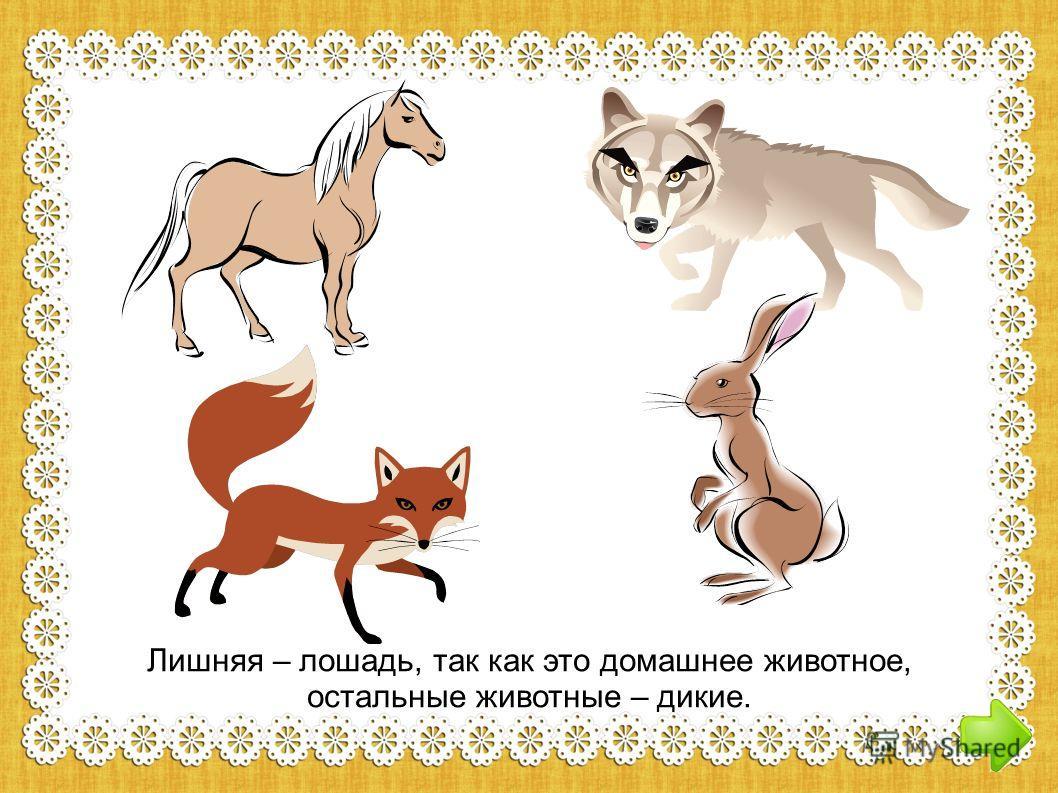 Лишняя – лошадь, так как это домашнее животное, остальные животные – дикие.