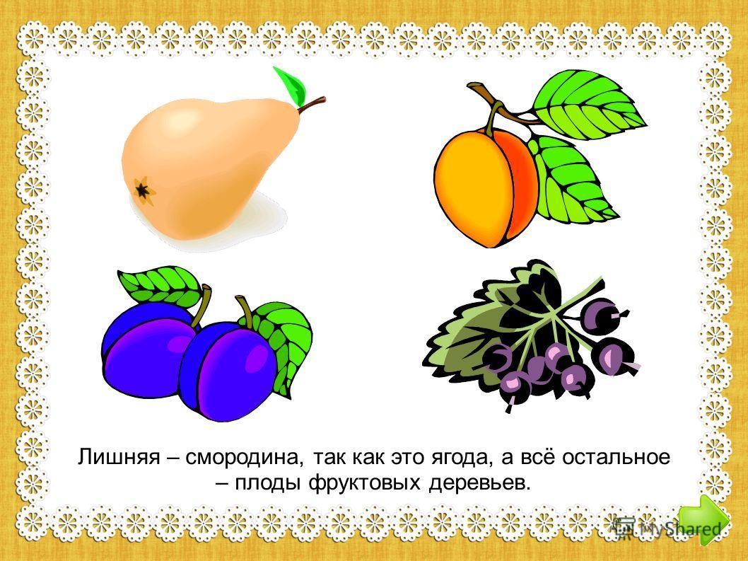 Лишняя – смородина, так как это ягода, а всё остальное – плоды фруктовых деревьев.
