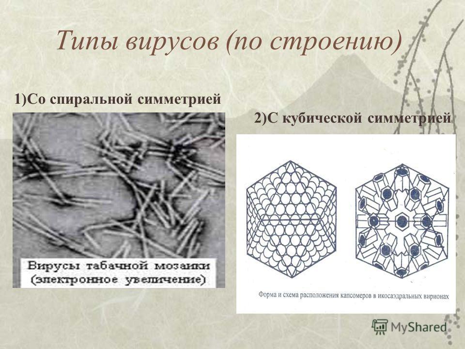 Типы вирусов (по строению) 1)Со спиральной симметрией 2)С кубической симметрией