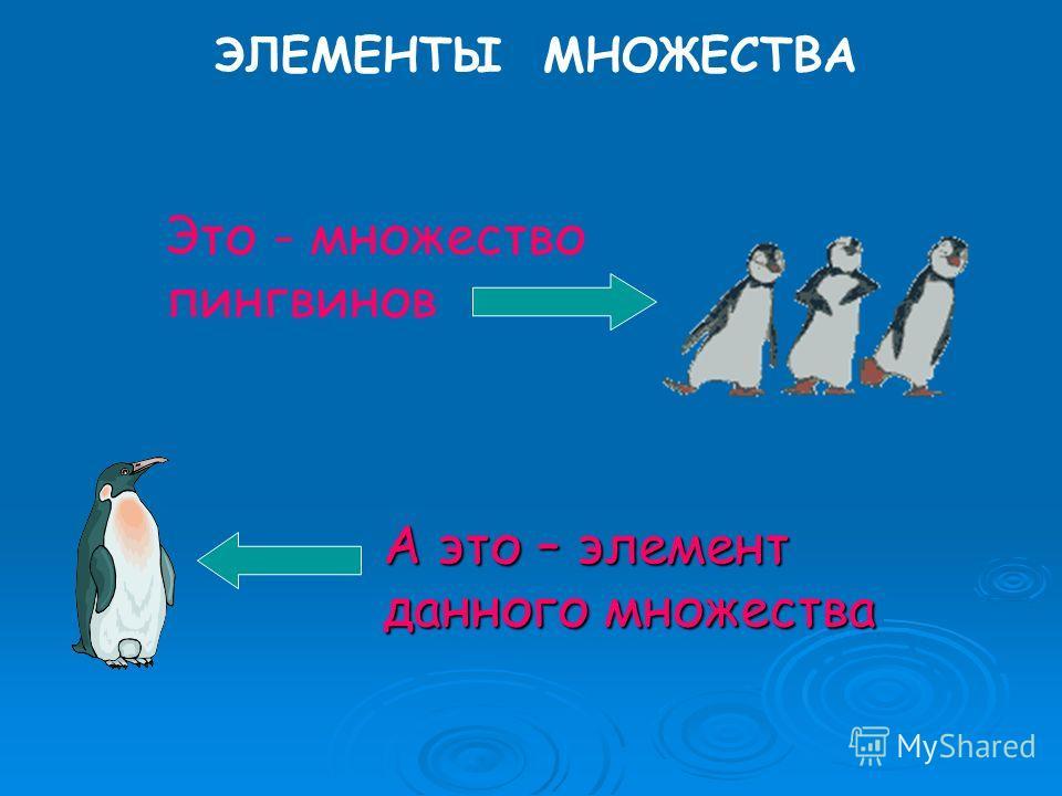 ЭЛЕМЕНТЫ МНОЖЕСТВА Это - множество пингвинов А это – элемент данного множества