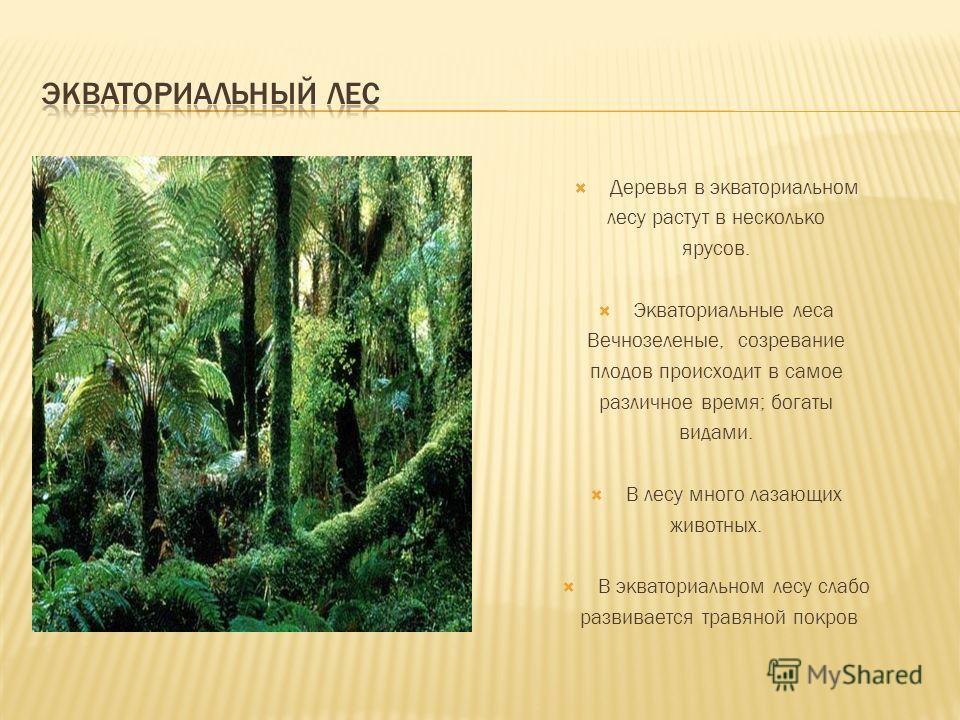 Деревья в экваториальном лесу растут в несколько ярусов. Экваториальные леса Вечнозеленые, созревание плодов происходит в самое различное время; богаты видами. В лесу много лазающих животных. В экваториальном лесу слабо развивается травяной покров