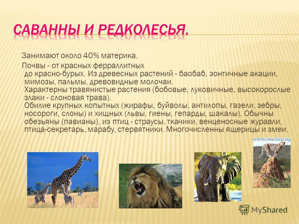 Занимают около 40% материка. Почвы - от красных ферраллитных до красно-бурых. Из древесных растений - баобаб, зонтичные акации, мимозы, пальмы, древовидные молочаи. Характерны травянистые растения (бобовые, луковичные, высокорослые злаки - слоновая т