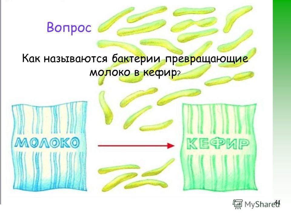 41 Вопрос Как называются бактерии превращающие молоко в кефир ?