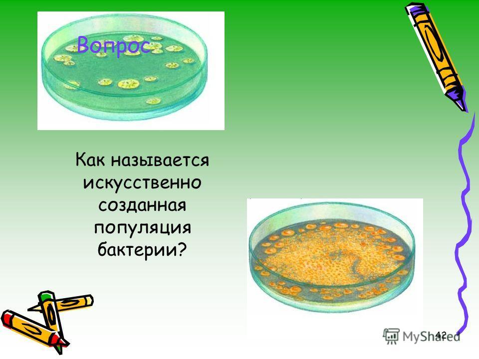 42 Как называется искусственно созданная популяция бактерии? Вопрос